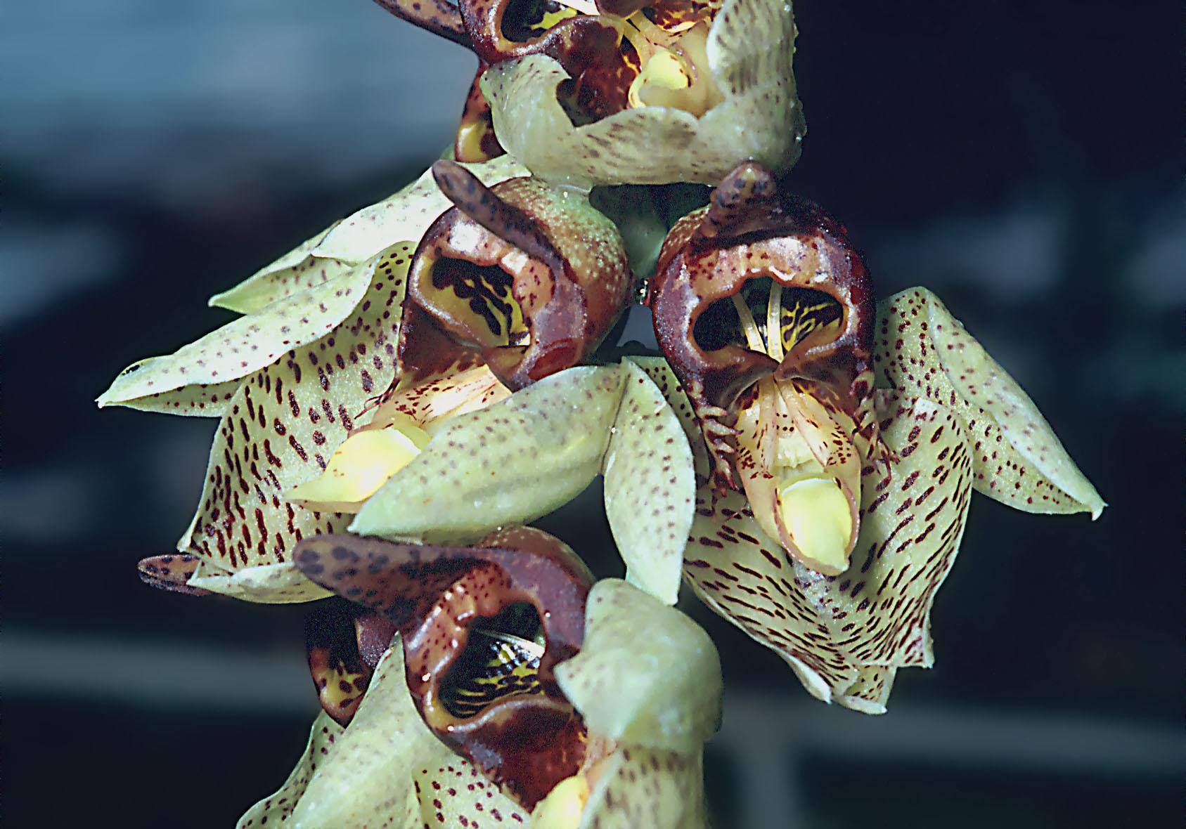 wenn orchideen die blüten verlieren